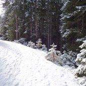 D-2227-winter-weg-nach-maria-waldrast.jpg